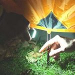 COMPACT CAMPING LIGHT