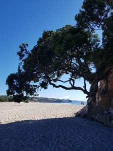 Letitia Buckle, blog, ambassador, beach, family, tree